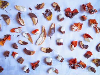 Receita de Frutas Desidratadas com Chocolate - Frutasdesidratadascomchocolate